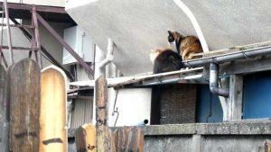 谷中のネコ ブラスト工房