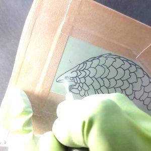 センザンコウ ガラス彫刻